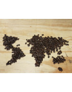 ODACREM COFFEE - Espresso beans or single origin, we got it